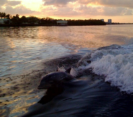 dolphin-pic.jpg