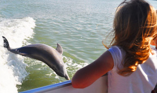 Dolphin Cruises Fort Myers Beach