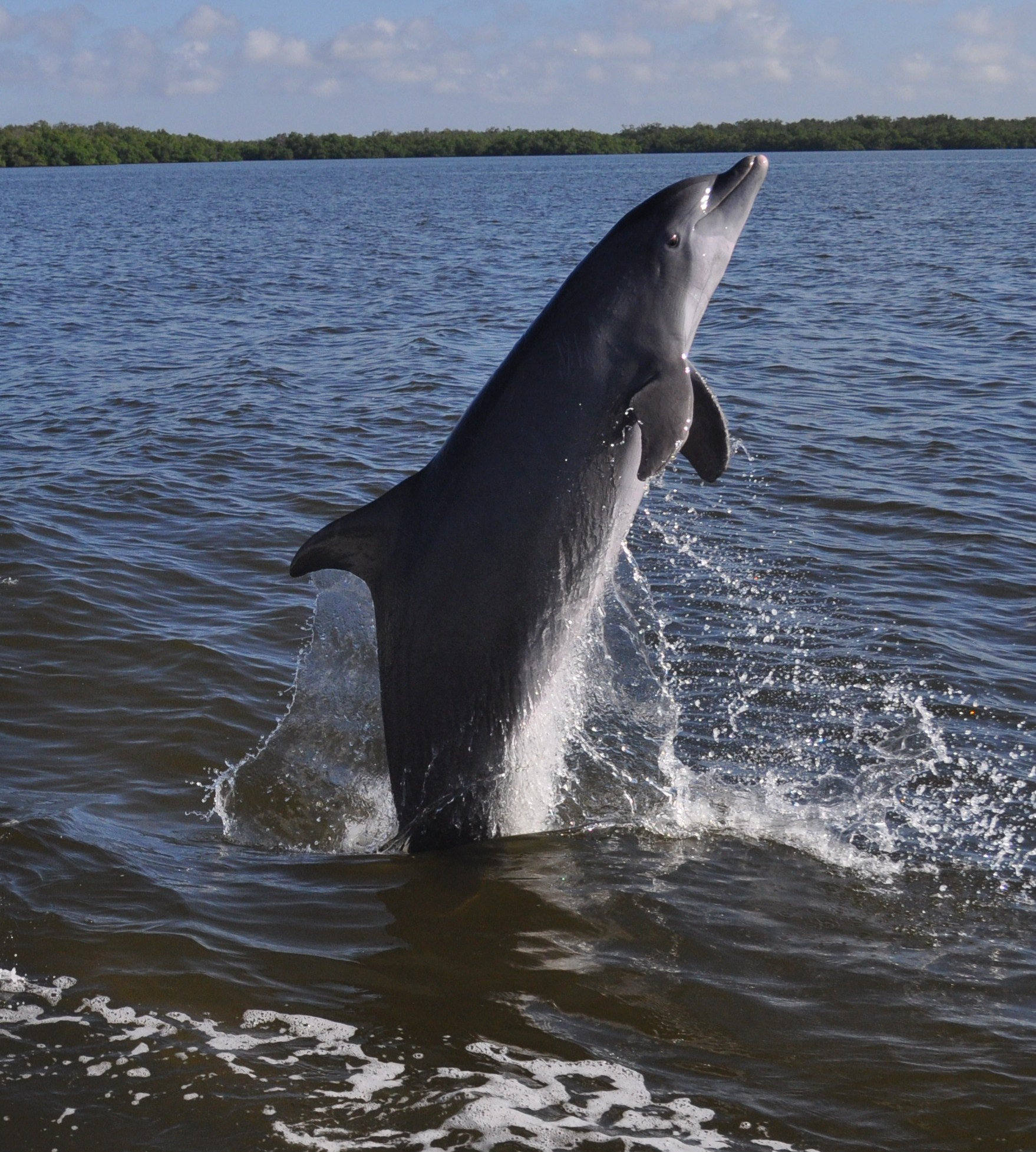 Island Time Dolphin Shelling Cruises Fort Myers Beach Fl