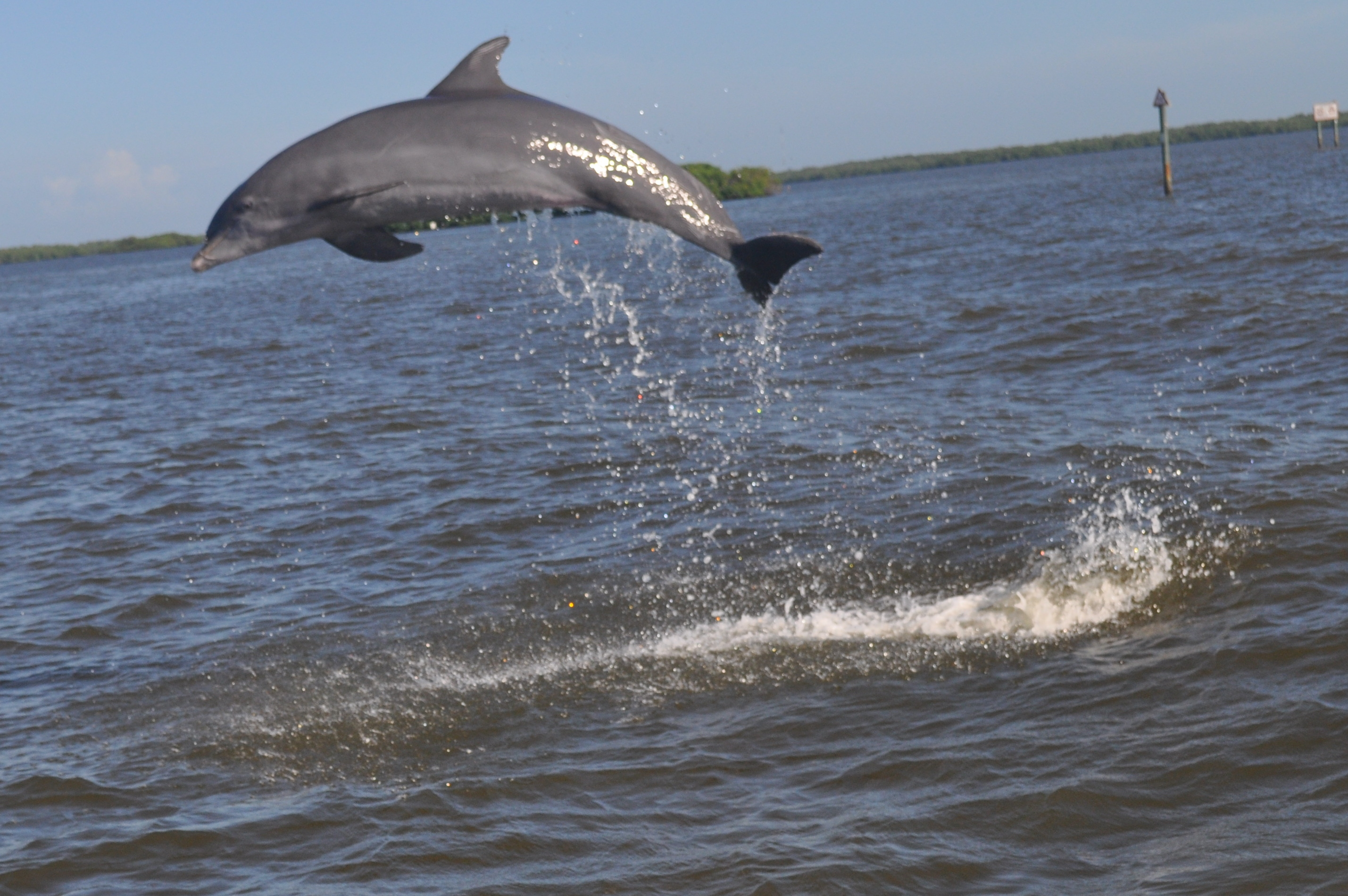 Fort myers beach dolphin cruise and fishing charter good for Fort myers fishing