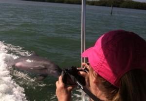dolphin cruise fort myers beach www.goodtimecharters.com